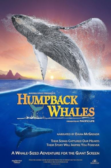 Humpback Whales, Vuulr Global Content Marketplace